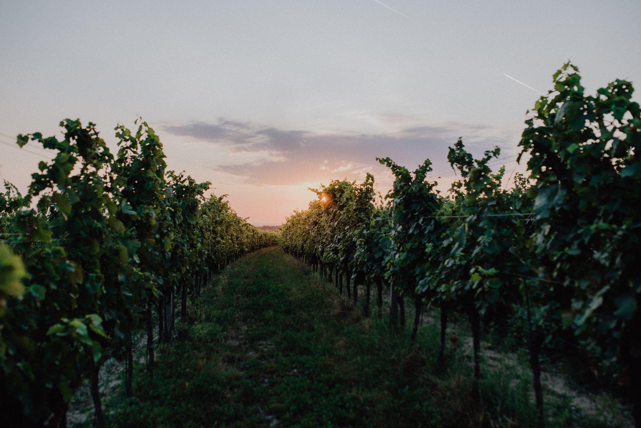 Dieses Foto zeigt das Weingut Kirnbauer