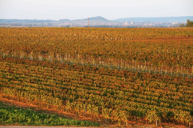 2009-Herbst-Weingarten.jpg