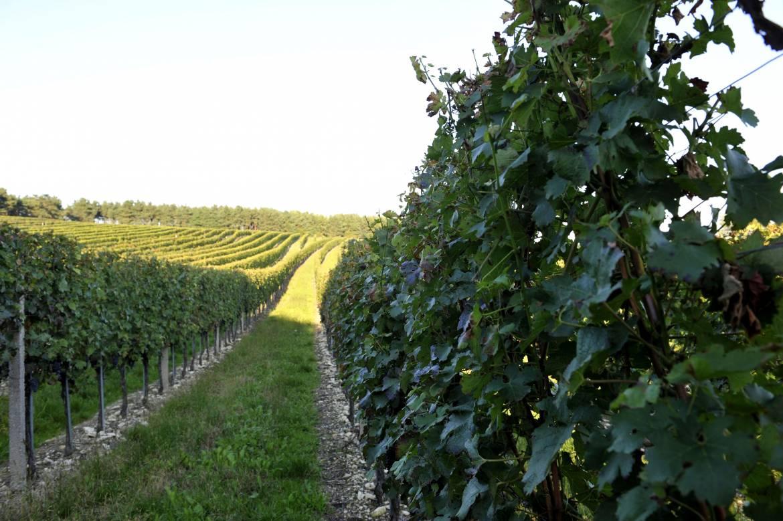 Weingarten-im-September.jpg