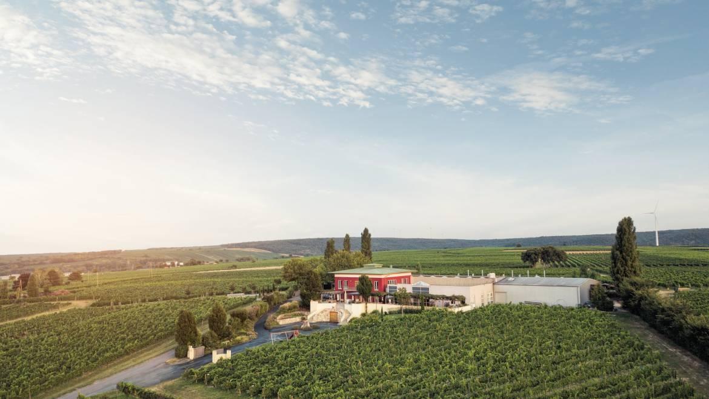 Das Weingut K+K Kirnbauer thront über den Weingärten von Deu…
