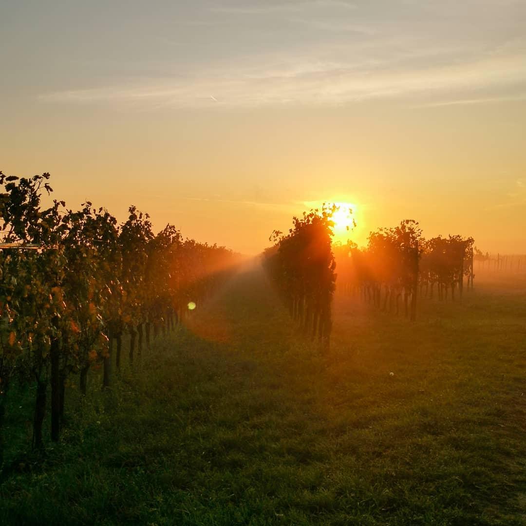 Es weicht der morgentliche Nebel der gold gelben Sonne. Stra…