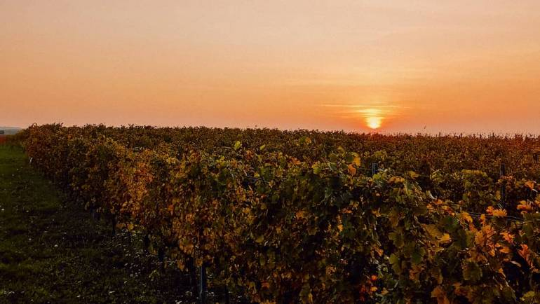 Der goldene Herbst macht seinen Namen volle Ehre. Sobald die…
