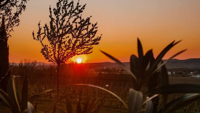 Sunset a la Blaufränkischland! #stayathome & #stayonwine…
