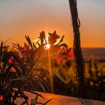Rotwein an heißen Sommertagen? #COOLREDS Für nächste Woche …