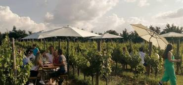 """Wine&Sound Am 12. September heißt es wieder """"Blaufränki…"""