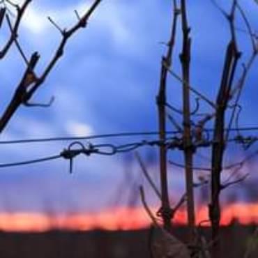 Stille kehrt in unsere Weingärten ein, aber die Arbeit ist n…