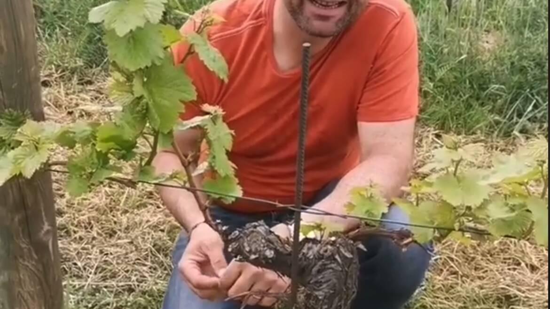 Ein kurzer Familienausflug in die Weingärten und dazu gibt e…